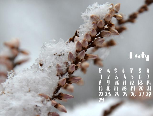 Dacon-Design-architekt-kalendarz-luty