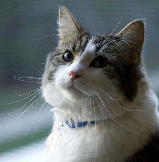 kucing oscar yang dapat mencium kematian seseorang