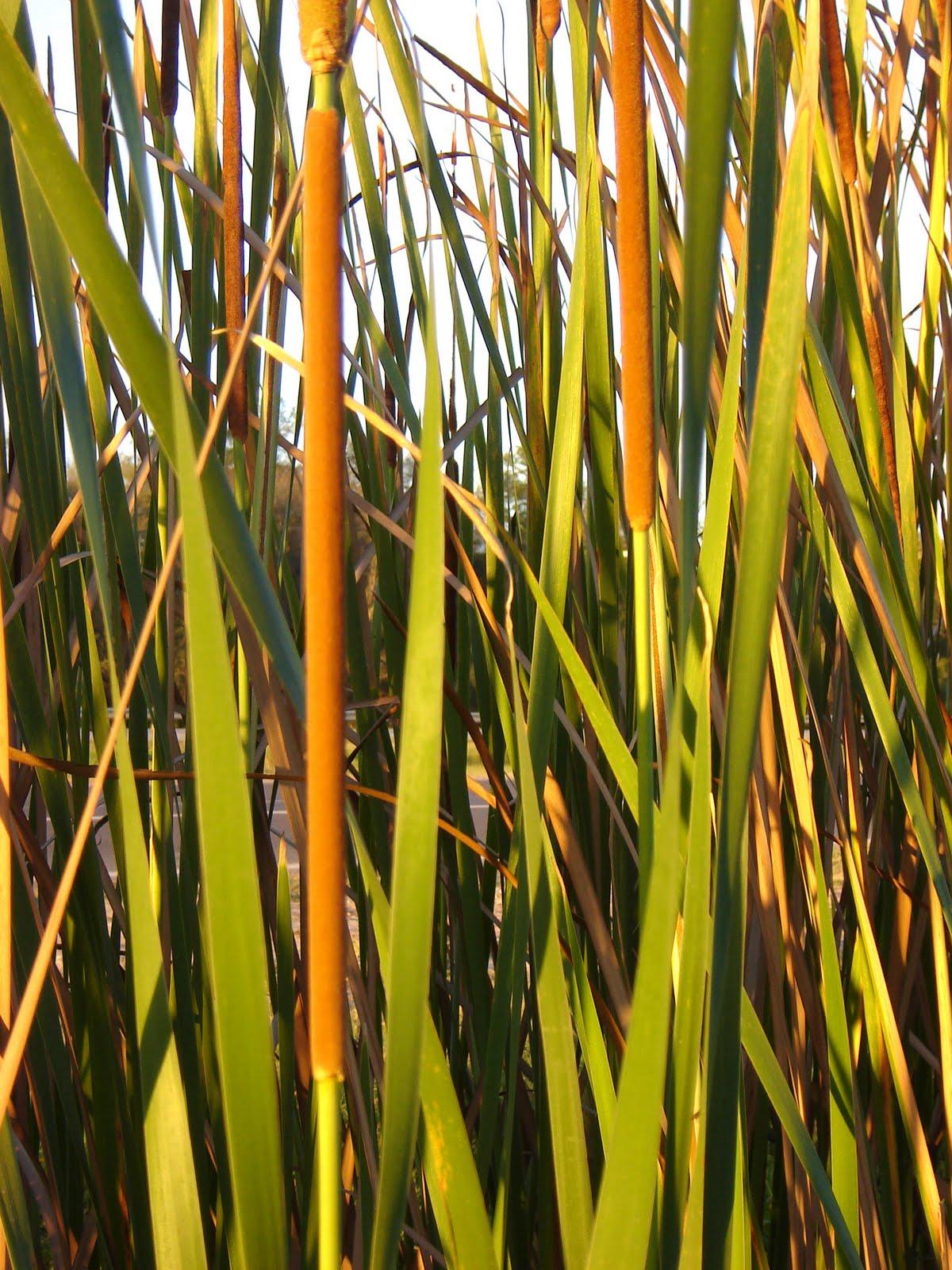 Paja en la hierba - 5 9
