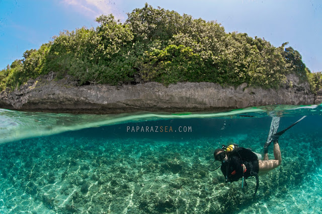 Scuba Diving, Underwater Photography, Dive Philippines, Dive Moalboal