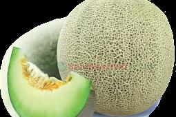 Manfaat Buah Melon untuk Kesehatan Kita