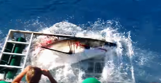 Tubarão-branco invade jaula - e tinha um mergulhador preso lá dentro - Capa