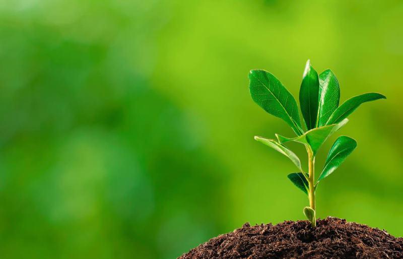 Nutrientes Inorgânicos Essenciais das Plantas