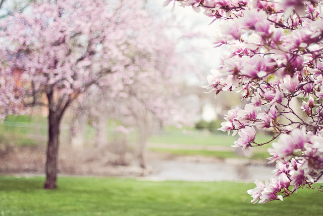 Çiçek açan ağaçlar