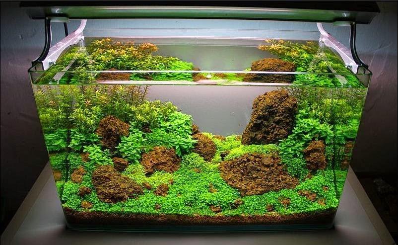 Cara Membuat Hiasan Aquarium Kecil Dari Styrofoam Sendiri
