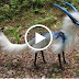 بالفيديو شاهد أغرب 8 حيوانات لن تصدق انها موجوده بالفعل شاهدها كيف تكون