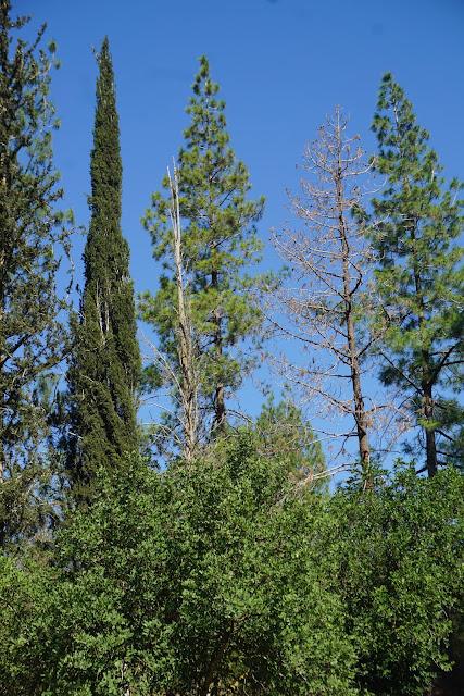 יער אשתאול - עין מסילה