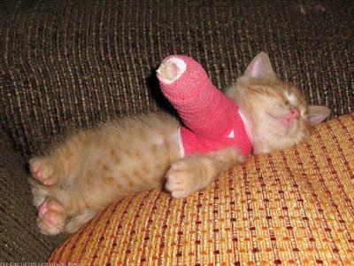 Armes Katzenbaby mit Gibsverband - lustige kranke Tiere