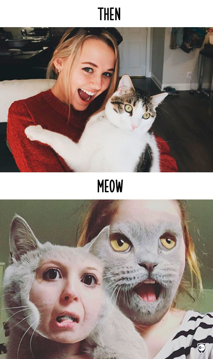 Then vs Meow How Technology Has Changed Cats' Lives (10+ Pics) - Taking Photos With My Hooman