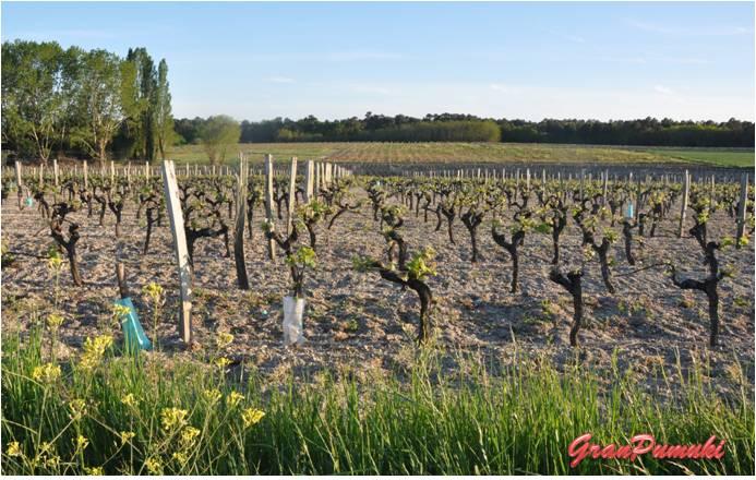 Blog de Viajes: Resumen Viajero 2014. Viñedos en Francia