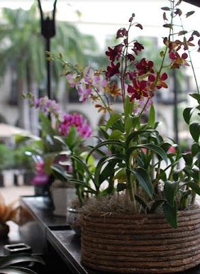 Tips Memindahkan Anggrek Ke Dalam Pot Bunga Yang Lebih Besar