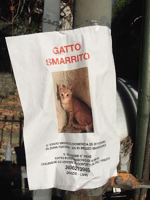 Poster for a lost male cat in Bergamo.