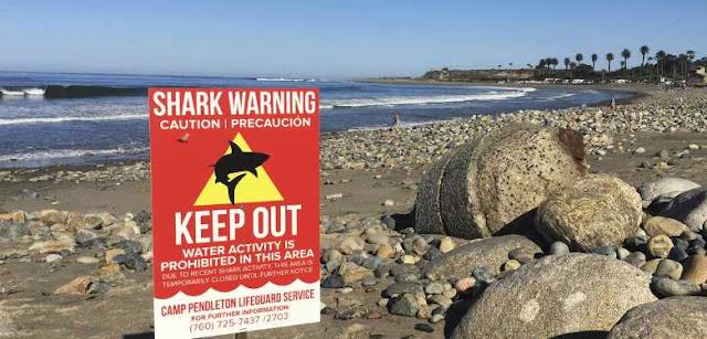 Tiburón ataca a mujer en playa del sur de California