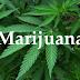 MPNAIJA GIST:New US law would force the federal government to treat marijuana like alcohol