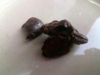 Vitamin Burung Cucak Ijo Sebelum Berangkat Lomba