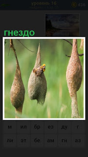 в подвешенном состоянии любопытные гнезда