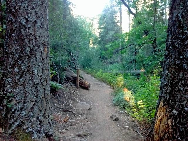 Weir Trail near Doane Pond parking lot