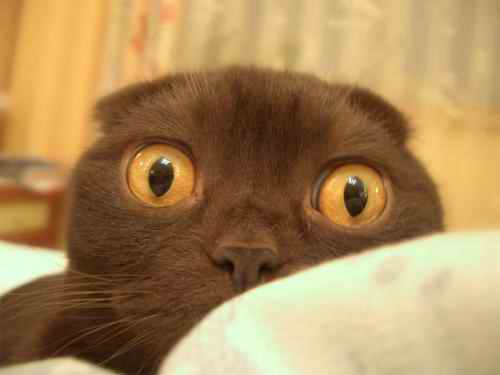 I see what you did there... | Funny Cat Pictures