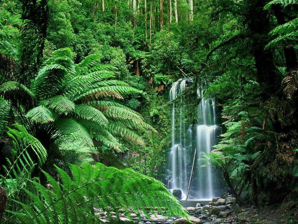 Australian Tropical Rainforest