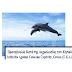 Δελτίο Τύπου: Και άλλο δελφίνι πεθαίνει στο Αττικό Ζωολογικό Πάρκο..