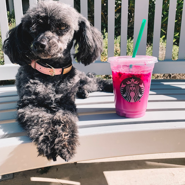 Everything you need to know about Starbucks new pink dragon drink