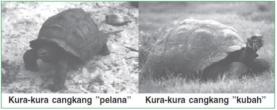 Cangkang pada kura-kura di Galapagos