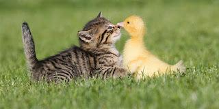 El pato y la gata