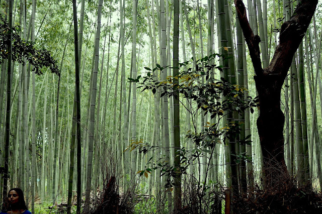 Arashiyama bamboo grove from singapore blog