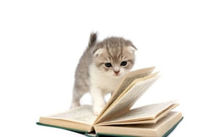 El aprendizaje del gato