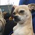 Η οργή των Ιρανών για έναν κακοποιημένο σκύλο...