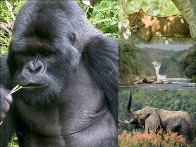 4 days gorills safari excussion,Gorilla safari,Gorilla tour,gorillas in Uganda,travel to Uganda and search for gorillas,Uganda mountain gorilla safari and tour,Visit africa and trek mountain gorillas