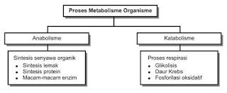 Jenis Metabolisme, Anabolisme, dan Katabolisme