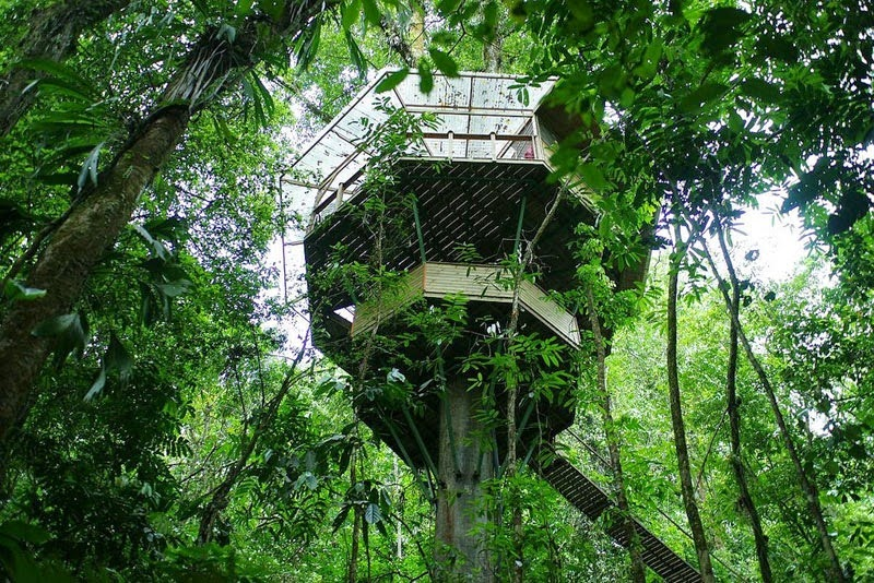 Finca Bellavista covers an entire peninsula of rainforest mountains. It has seven tree houses and seven cabins available for rent. - Your Childhood Dreams Will Be Re-Awakened When You See These Magical Treehouses.
