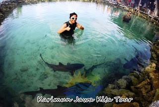 penangkaran hiu menjangan besar