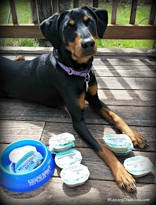 Penny wants to know.. Has your dog tried Natural Balance LID Wet Cups? #review #dogfood #ChewyInfluencer #LapdogCreations ©LapdogCreations