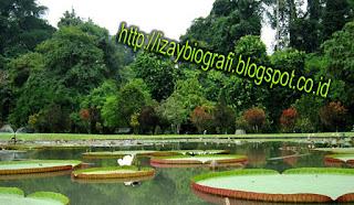 Kebun Raya Bogor, mula-mulanya adalah bagian dari Samida (hutan buatan atau taman buatan) yang telah ada pada pemerintahan Sri Baduga Maharaja (Prabu Siliwangi, 1474-1513) dari Kerajaan Sunda, seperti yang sudah tertulis didalam prasasti Batutulis. Hutan buatan ini dibuat dengan maksud untuk menjaga kelestarian lingkungan, yang dijadikan sebagai tempat untuk memelihara benih-benih kayu yang langka. Hutan ini kemudian terlantar setelah Kerajaan Sunda ditaklukkan oleh Kesultanan Banten, dan akhirnya pada pertengahan abad ke-18 Gubernur Jenderal van der Capellen membangun rumah peristirahatan di salah-satu sudut hutan buatan ini. Pada awal tahun 1800-an, Gubernur Jenderal Thomas Stamford Raffles (yang mendiami Istana Bogor saat itu)