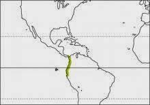 plumbeous hawk Cryptoleucopteryx plumbea