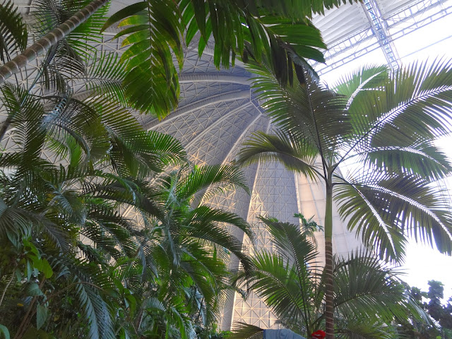 palm trees at indoor water park in Germany