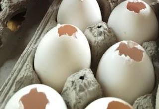 putih telur untuk pembersih bahan kult