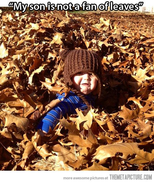 not a fan of leaves