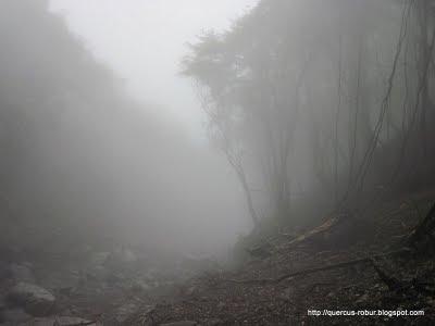 9 - Neblina en el arroyo de Cerro Viejo