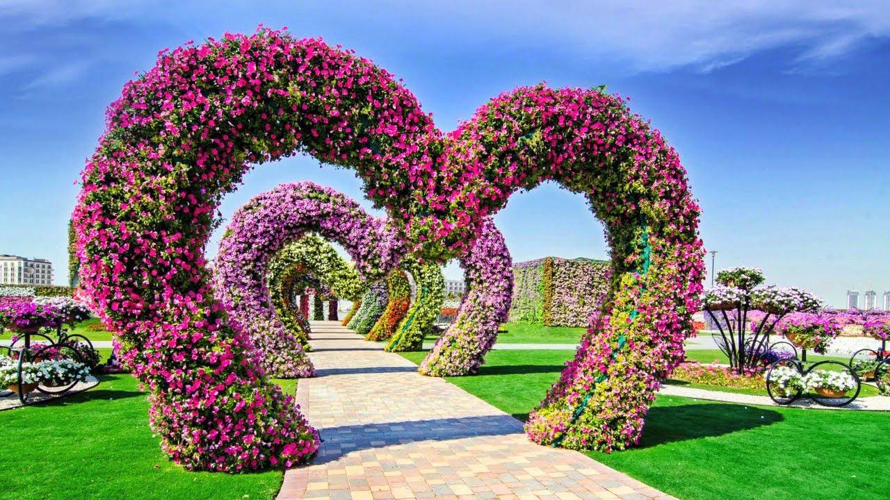 natural flower garden that will never seen you before kero tv