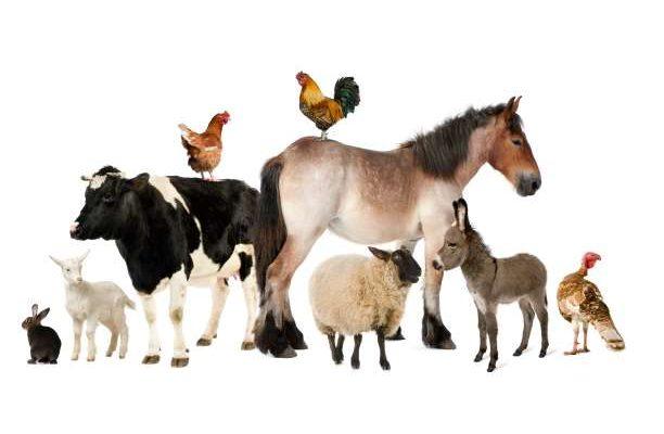 ψυχαγωγικό τεστ με ζώα