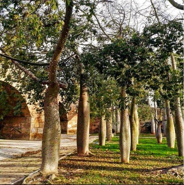 Giardini del Turìa Valencia