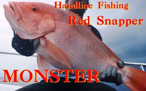 Handline Fishing Got Monster Red Snapper Too Much Tired
