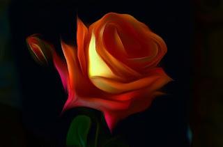 Rose, Roza, hoa hồng, Roses, faqekuq, ruže, roser, roses,