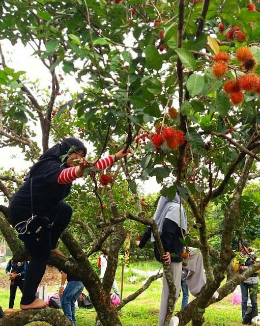 taman-buah-mekarsari
