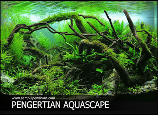 PENGERTIAN AQUASCAPE