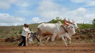 maharashtra-loan-releif-farmer