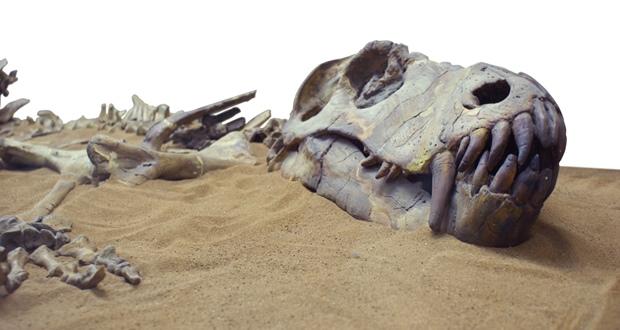 العثور على آثار أقدام ديناصورات يعود تاريخها إلى 140 مليون سنة بتطوان